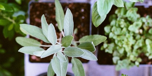4 Herbs To Grow At Home This Spring